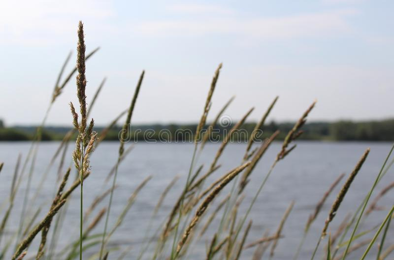 De lentelandschap met mening van meer met groene gras en takken Zonnige dag in aard met blauwe hemel en wit wolken en bos royalty-vrije stock foto