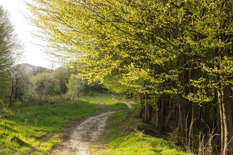 De lentelandschap met voetpad in groen gras dichtbij mistig bos royalty-vrije stock afbeelding