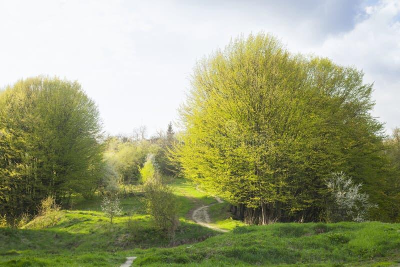 De lentelandschap met voetpad in groen gras dichtbij mistig bos stock afbeelding