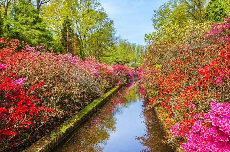 De lentelandschap in park Keukenhof, Nederland stock afbeelding