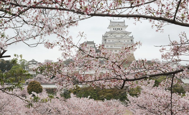 De lentelandschap van een Japans kasteel in het vroege ochtendlicht stock afbeeldingen