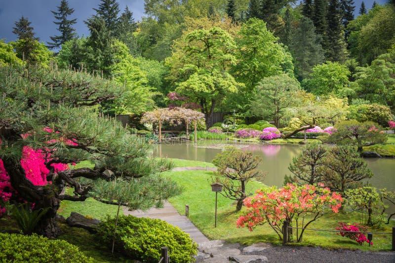 De lentelandschap van Japanse Tuin met Vijver en Azalea Flowers in Bloei stock fotografie