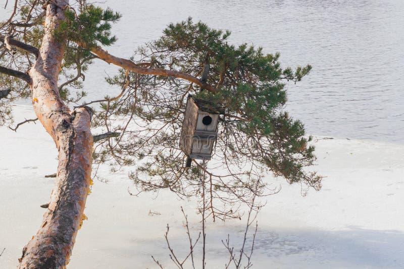 De lentelandschap van Kymijoki-rivierwateren in ijs en het nestelen doos op een boom, Finland, Kymenlaakso, Kouvola royalty-vrije stock foto