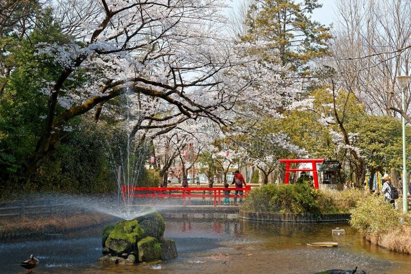 De lentelandschap van mooie kersenbloesems van reusachtige Sakura-bomen door een vijver in Yono-Park, Saitama stock foto's
