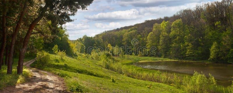 De lentelandschap - weg dichtbij het pijnboombos, naast een vijver royalty-vrije stock fotografie