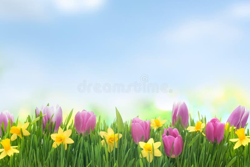 De lentenarcissen en tulpenbloemen in groen gras royalty-vrije stock afbeelding