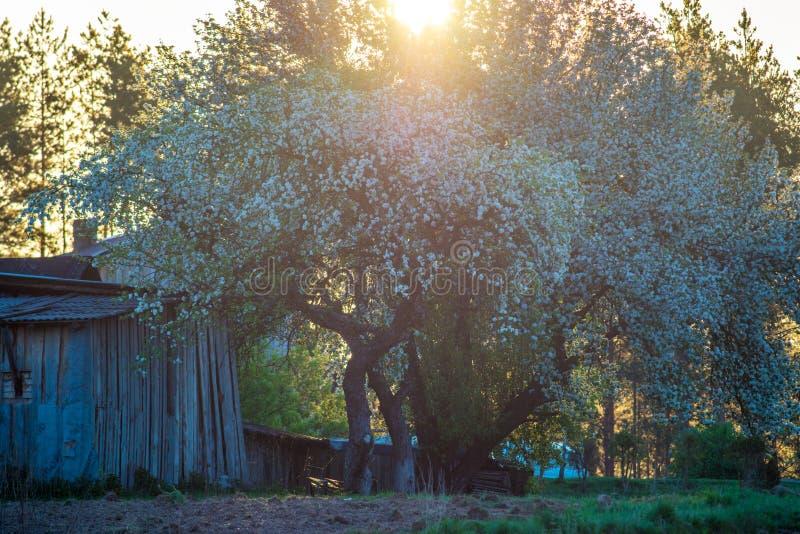 De lenteochtend in landelijk platteland stock foto's
