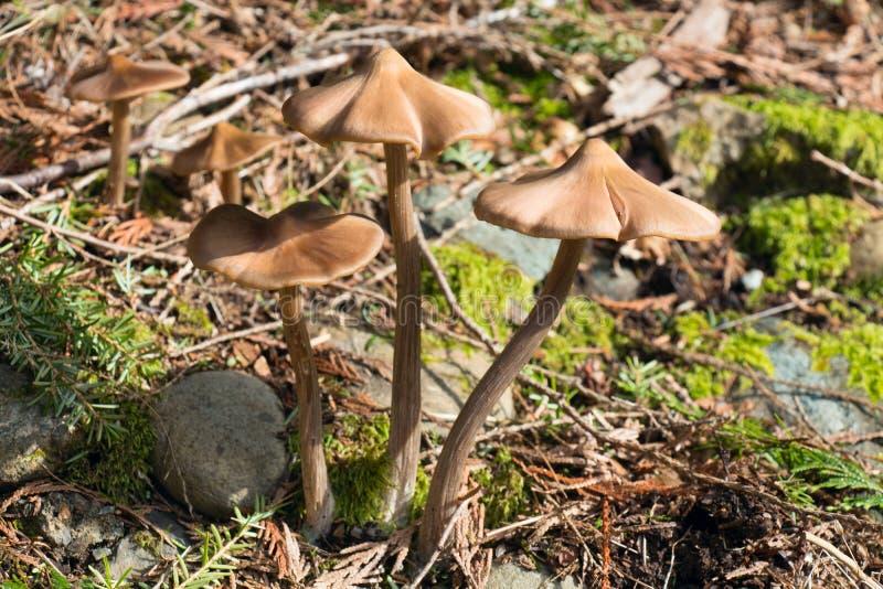 Download De Lentepaddestoelen In Het Bos Stock Foto - Afbeelding bestaande uit vreedzaam, springtime: 39110398