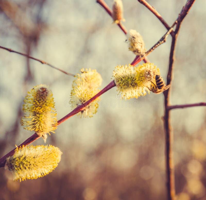 De lenteprentbriefkaar Honingbijen en de lenteweide royalty-vrije stock afbeelding