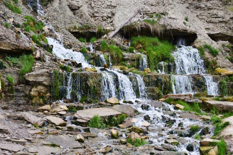 De lentespuiten van de grond, rond het groene gras, het mos en de stenen met flagstones stock foto's
