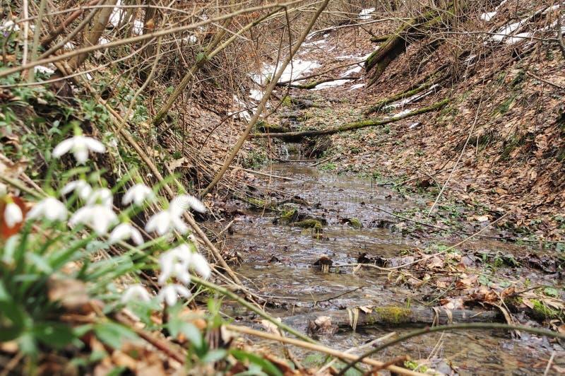 De lentestroom van Alpen stock afbeeldingen