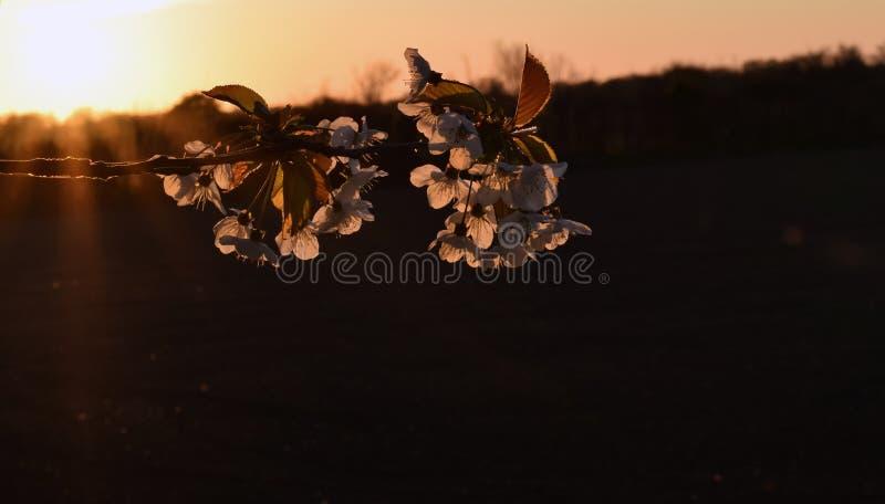 De lentetak royalty-vrije stock foto