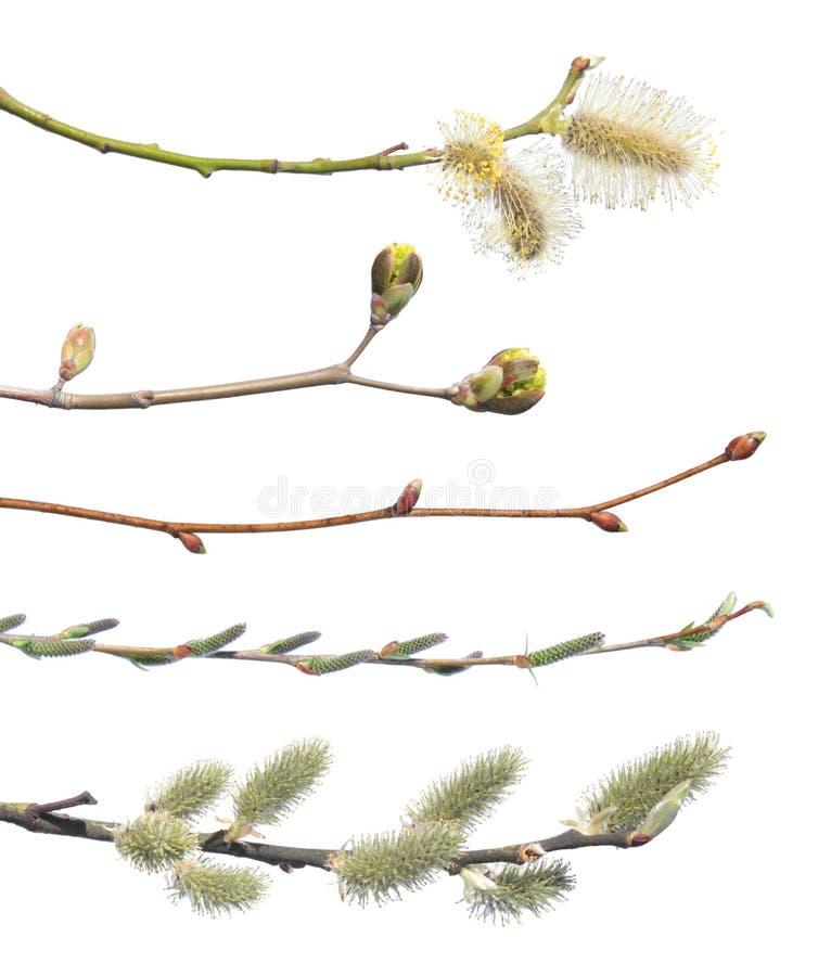 De lentetakken op wit worden geïsoleerd dat stock fotografie