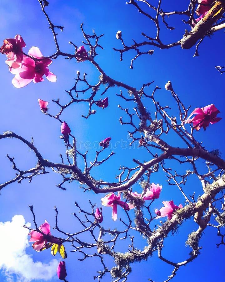 De de lentetijd… nam bladeren, natuurlijke achtergrond toe royalty-vrije stock afbeeldingen