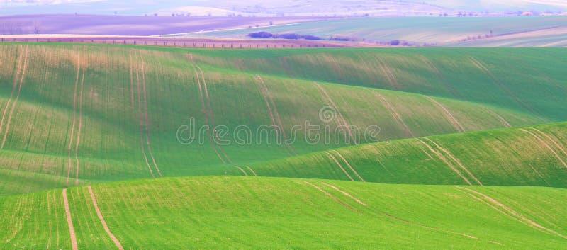 De lentetijd in Moravian Toscani?, de wijngebied van Zuidenmoravian stock foto's