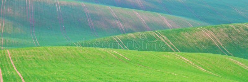 De lentetijd in Moravian Toscani?, de wijngebied van Zuidenmoravian royalty-vrije stock afbeelding