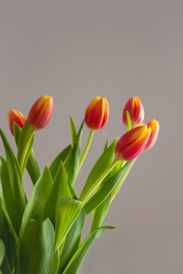 De de lentetulpen bloeit kaart stock afbeelding