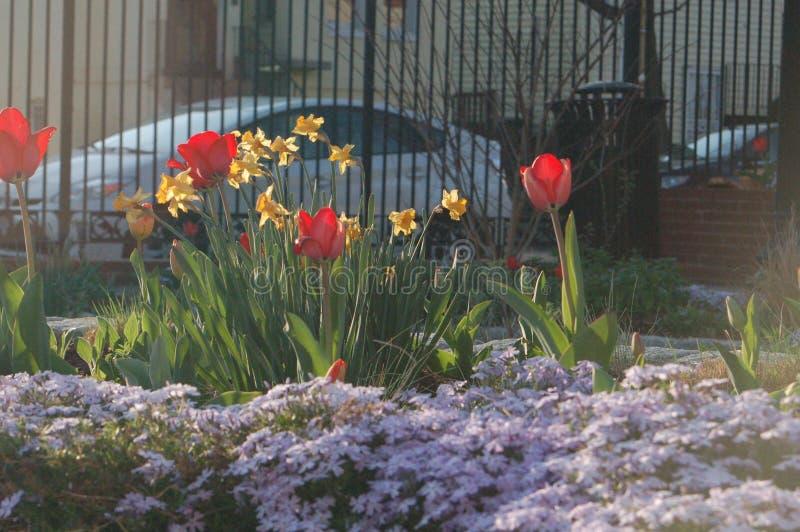 De lentetulpen Washington D C stock afbeeldingen