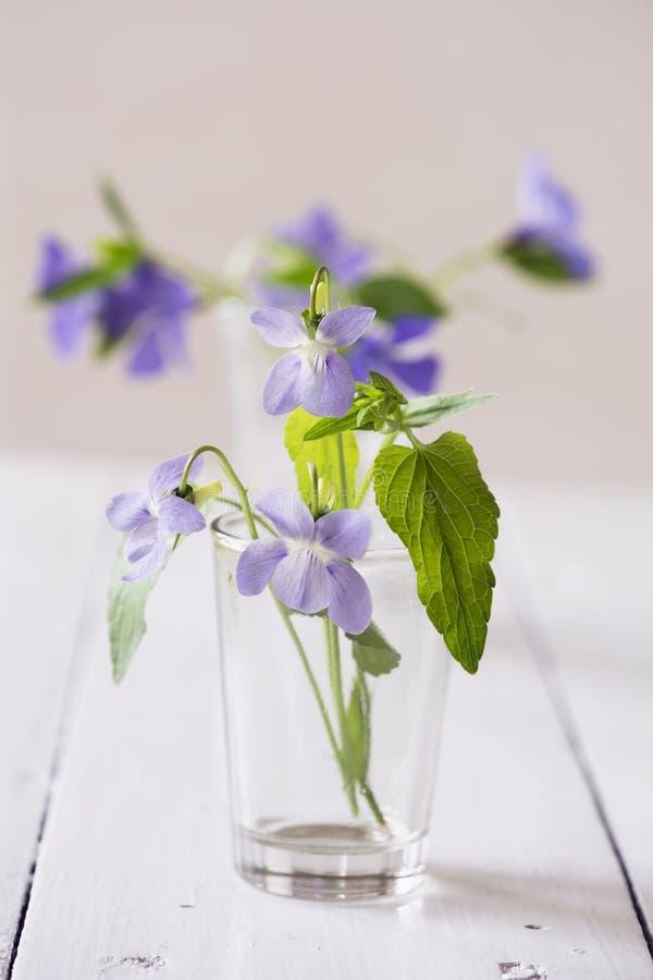 De lenteviooltjes in vaas royalty-vrije stock afbeelding