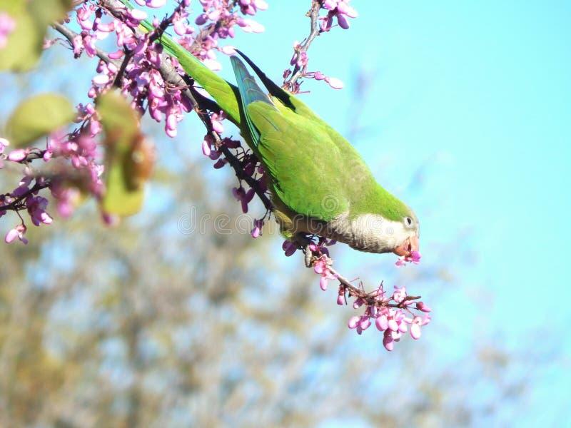 De lentevogel royalty-vrije stock afbeeldingen