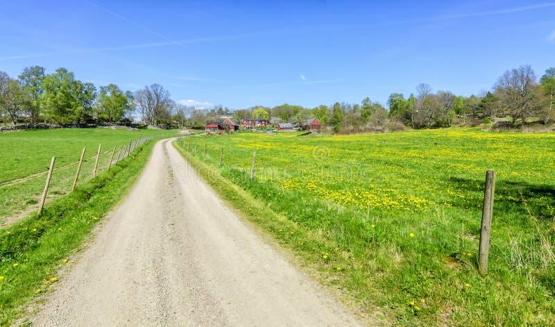De lenteweg aan het Zweedse landbouwbedrijf stock fotografie
