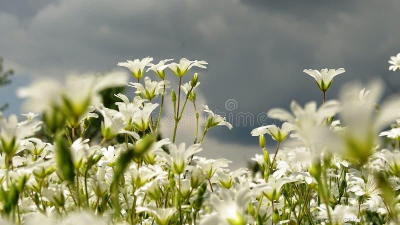 De lenteweide stock foto