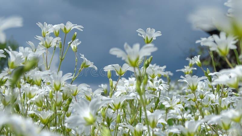 De lenteweide stock afbeelding