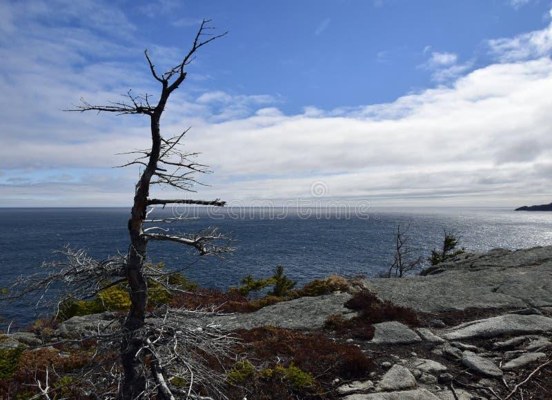 De lentezeegezicht langs de Sleep van VaderTroy ` s in Newfoundland Canada, dichtbij Flatrock royalty-vrije stock afbeelding