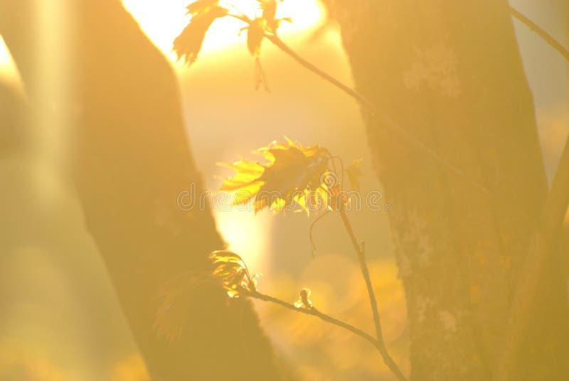 De lentezon en bladeren royalty-vrije illustratie