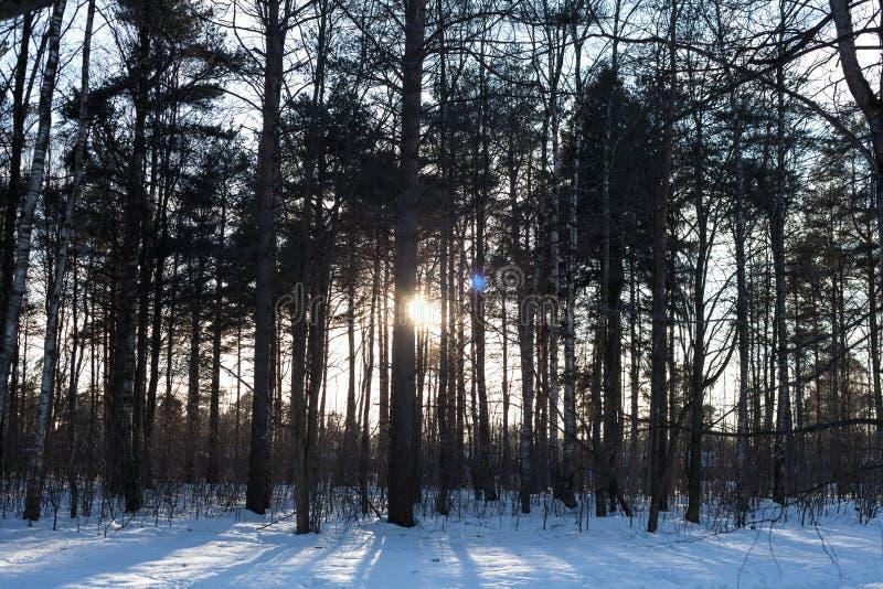 De de lentezon glanst door de boomstammen van de bomen in het park royalty-vrije stock afbeelding