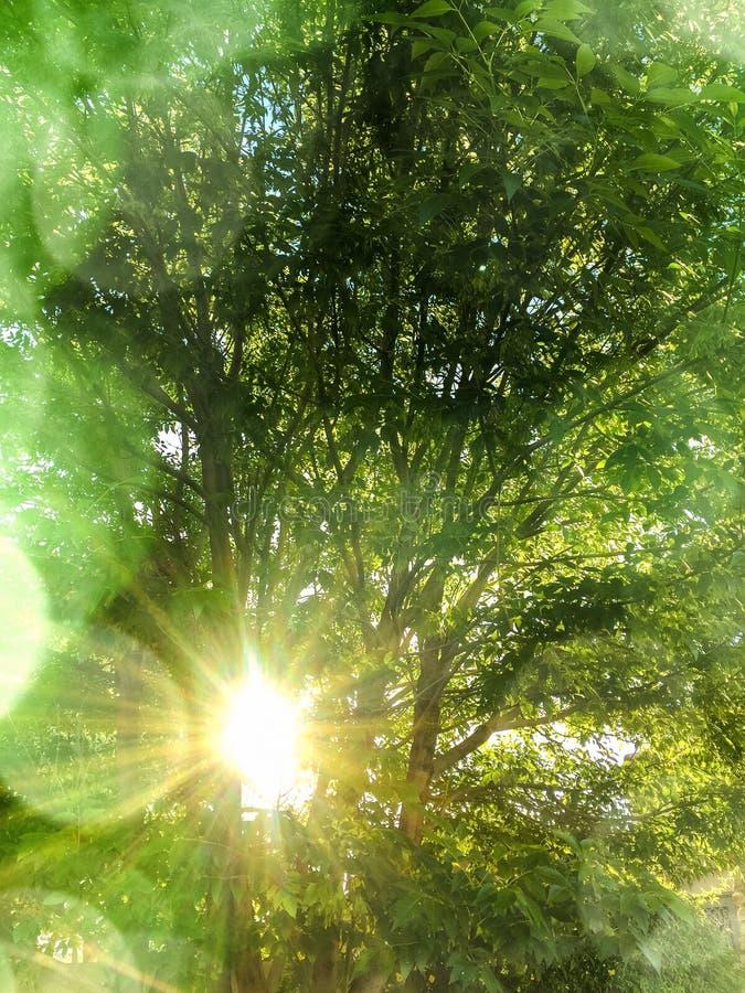De lentezon het filtreren door de bomen royalty-vrije stock afbeeldingen