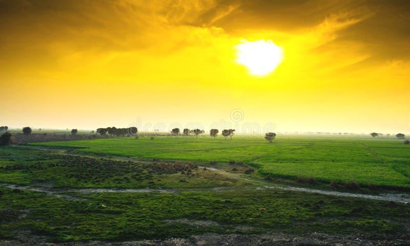 De lentezonsondergang over groene gebieden stock afbeelding