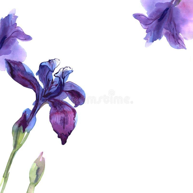 De leuke achtergrond van de waterverfbloem met purpere irissen uitnodiging De kaart van het huwelijk stock illustratie