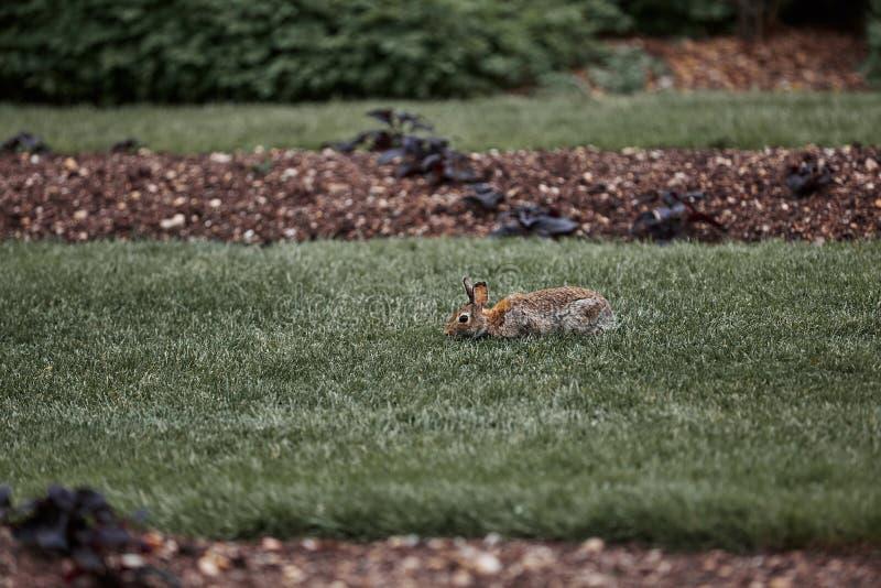 De leuke bont openluchtwildernis van Pasen van het konijnkonijntje stock foto