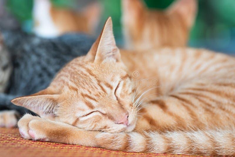 De leuke gemberkat slaapt op de mat stock foto's