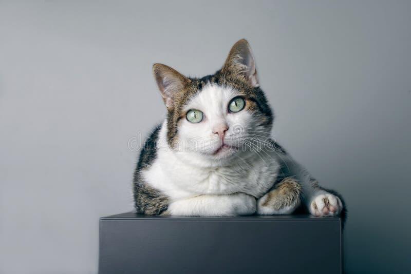 De leuke gestreepte katkat ligt op een grijze kubus en het kijken nieuwsgierig aan de camera stock afbeelding