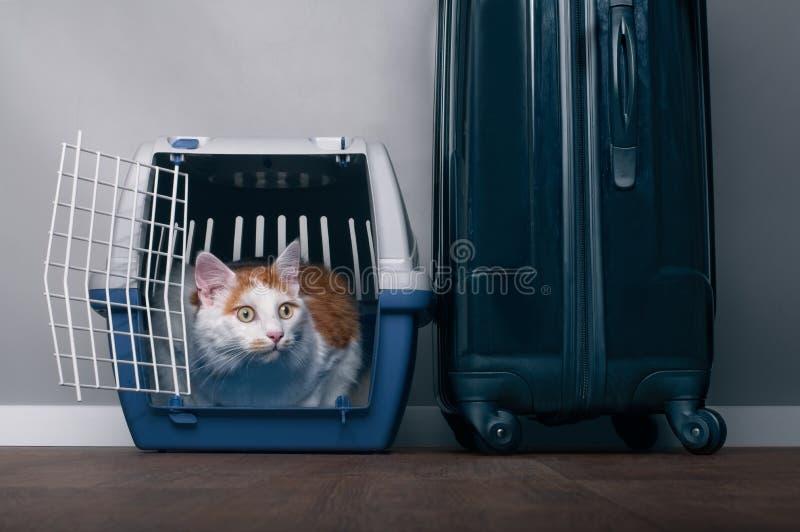 De leuke gestreepte katkat zit in een reiskrat naast een koffer en kijkt angstig sideway s stock afbeelding