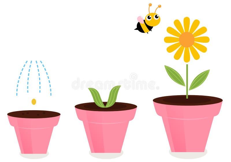 Bloem in de stadia van de pottengroei die op wit worden geïsoleerdg stock illustratie