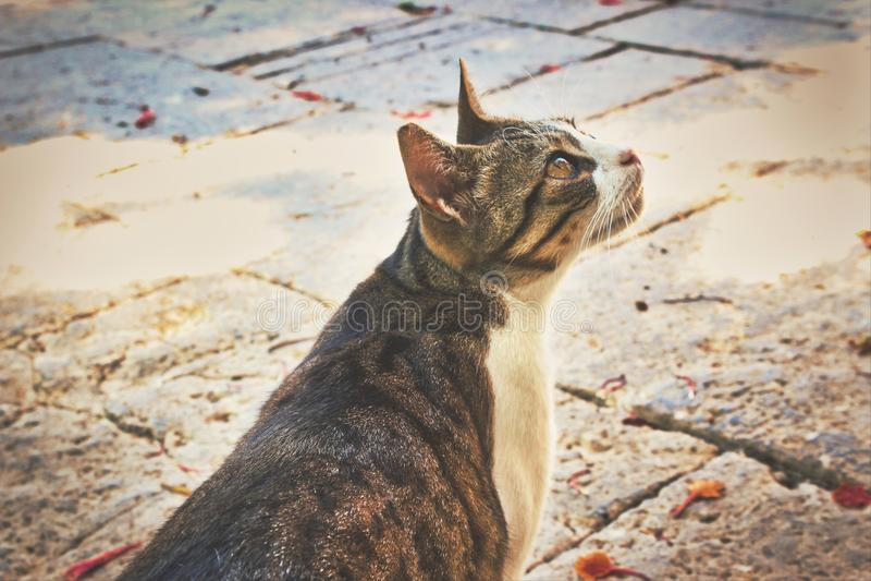 De leuke kat die van de potgestreepte kat van de zon genieten en in een park in openlucht in de zomer jagen stock afbeelding