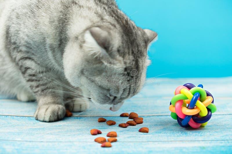 De leuke kat eet droog voedsel royalty-vrije stock foto's