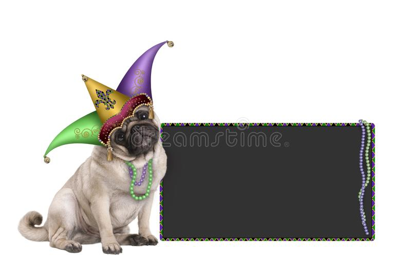 De leuke Mardi-pug van grascarnaval zitting van de puppyhond neer met de hoed van de harlekijnnar en bordteken royalty-vrije stock afbeeldingen