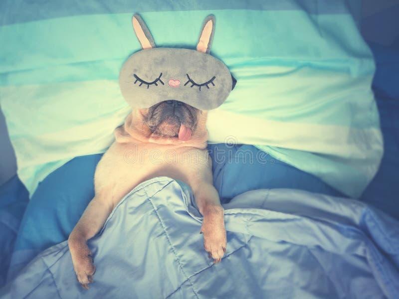 De leuke pug rust van de hondslaap met grappig masker in het bed, omslag met bl royalty-vrije stock foto's