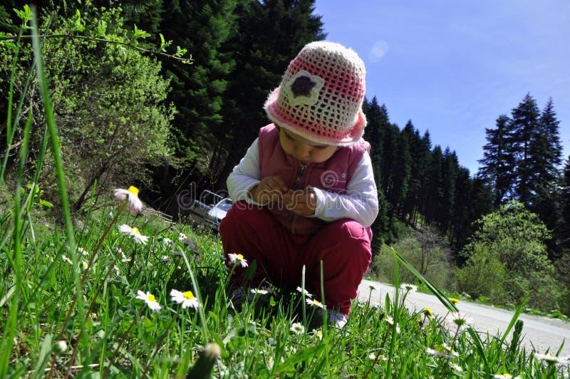 De leuke ruikende bloemen van weinig peutermeisje stock afbeelding