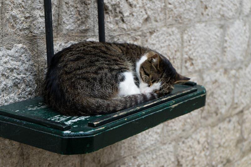 De leuke slaap grijze en witte kat, het sliep op de groene houten lijst in de straat, Concept - ontspan Gelukkige Kattenslaap die royalty-vrije stock foto