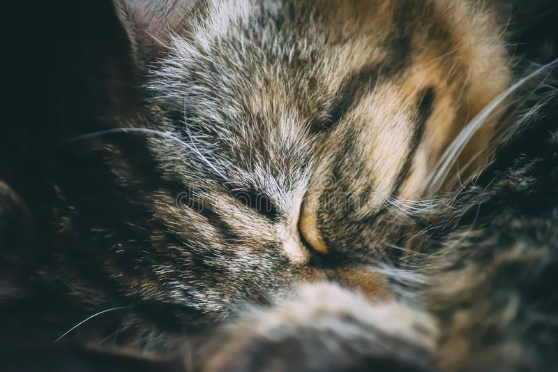 De leuke slaap van het kattenhuisdier stock fotografie