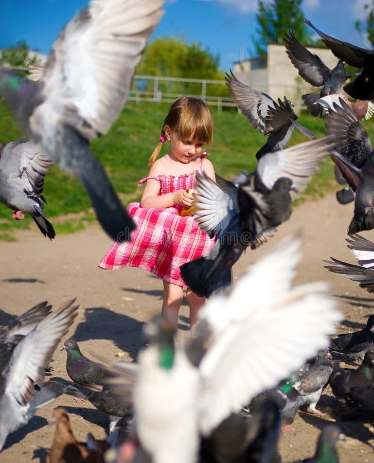 De leuke voedende duiven van de meisjekleding stock fotografie