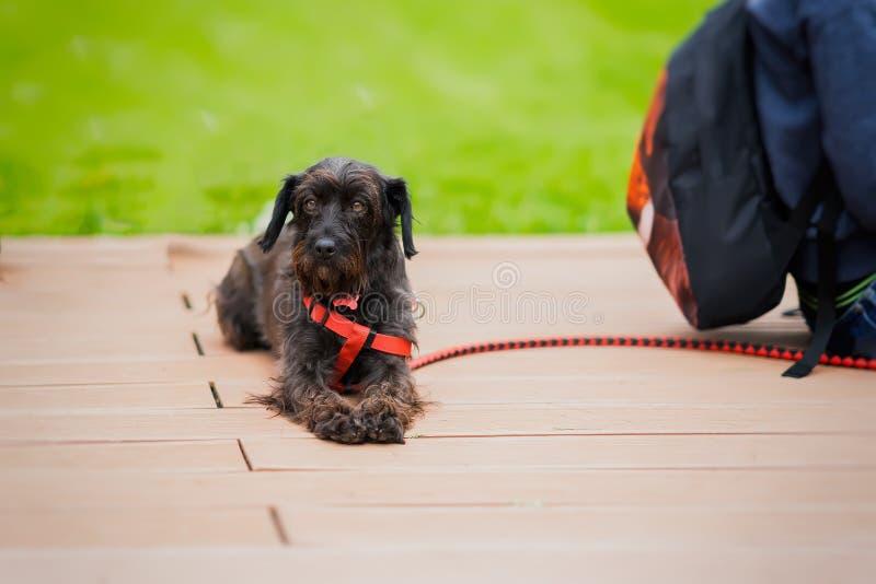 De leuke volwassene verliet Hond met droevige ogen van goed te keuren schuilplaatswachten Blik van hoop Concept eenzaamheid stock fotografie