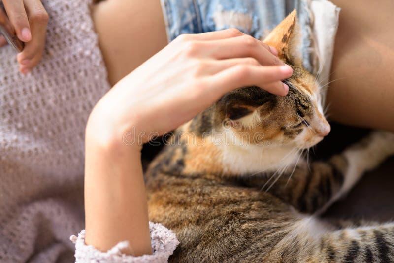 De leuke Vrouw van Calicocat being petted by young stock foto
