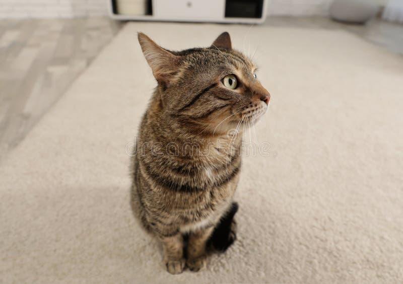 De leuke zitting van de gestreepte katkat op licht tapijt royalty-vrije stock foto