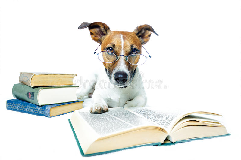 De lezingsboeken van de hond stock afbeelding